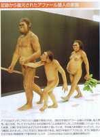 アファール猿人の家族.JPG